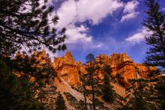 Conifers and hoodoos Stock Photos