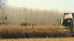 Combine harvester in a field of corn Stock Footage