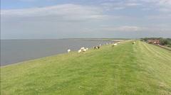 Sheep graze on sea dike + pan Wadden Sea near Paesens-Moddergat, The Netherlands Stock Footage