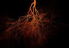 nervous or blood system.  medical illustration - stock illustration