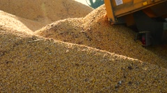 Stock Video Footage of Food factory, Food, Cereal-Tractor is dumping corn grain