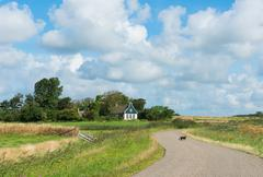 cat on road on texel. - stock photo