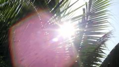 Close up of palms with sunlight behind the leaves Stock Footage