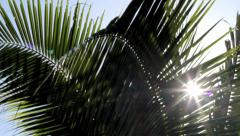 Tropic palms wiht backlight Stock Footage
