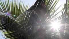 Palms in the wind detail Stock Footage