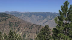 Oregon Hells Canyon with pine tree s Stock Footage