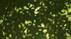 Shadow of the leaves of trees moving in slow motion Stock Footage