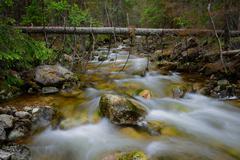 rocky forest creek - stock photo