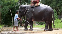 Young Elephant Taking a Bath. Slow Motion. Stock Footage