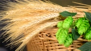 Stock Video Footage of hops and barley malt in the basket,panning