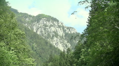 Drive past the trees in mountains Stock Footage