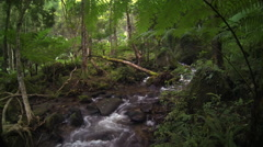 Scenic wild tropical forest and fresh water creek flowing along wet mossy rocks Stock Footage