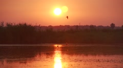 Swallows flying above lake surface at sunset-super slow motion Stock Footage