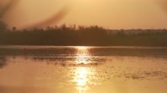 Swallows flying above water surface at sunset time in super slow motion efect Stock Footage
