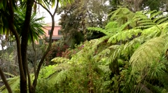 Portugal Madeira 062 giant ferns in botanic garden of Monte village Stock Footage