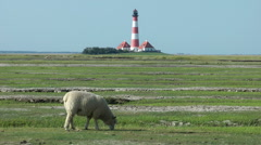 Sheep in front of Westerhever lighthouse, Schleswig-Holstein, Germany Stock Footage
