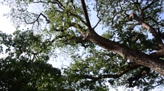 Nature tree wind and bird at public park in Nonthaburi Thailand Stock Footage