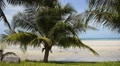Tropical Beach with Palms.  Footage