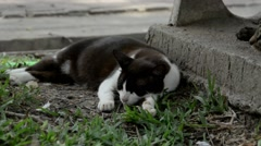 Cat napping in the park - stock footage