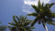 Stock Video Footage of Coconut Palm Tree against Blue Sky. Slow Motion.