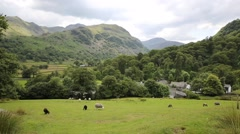 Sheep in a field at Seatoller Borrowdale Valley Lake District Cumbria England UK Stock Footage