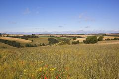 agricultural landscape with wildflowers - stock photo