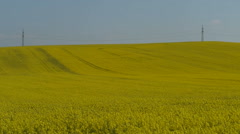 Landscape Of Blooming Rapeseed Field Stock Footage