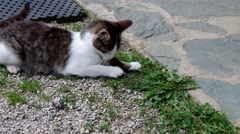 Cat and mouse in the yard of a house Stock Footage