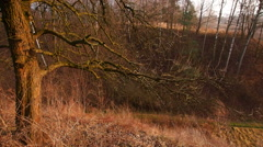 Polish Rural Landscape Stock Footage