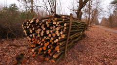Wooden Log Stacks along the Forest Road for Forestry Industry - stock footage