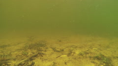 Muddy waters of the lake with floating small fish Stock Footage