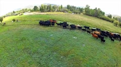 Aerial Shot of Ranchers hearding Cattle 5 - stock footage