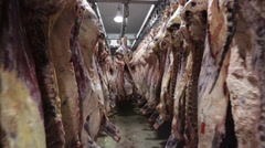 Slaughter butcher house hanging beef in freezer Stock Footage