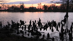 Tennessee Reelfoot Lake Cypress view at sunset cypress knees in foregound cx Stock Footage