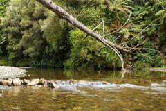 tree fallen river - stock photo