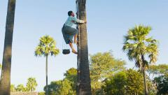 Bagan, myanmar - 12 jan 2014:  man climb up on a tree for traditional palm ju Stock Footage