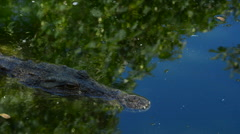 Crocodile in the river Stock Footage
