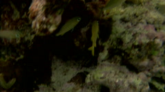 Stock Video Footage of Caribbean tropical fish plankton algae coral