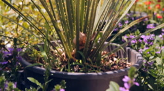 Tropical gardens, cactus Stock Footage