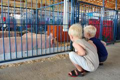 young children looking at pigs at county fair - stock photo