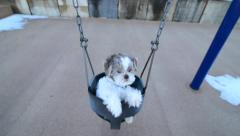 Dog enjoying the park in a swing Stock Footage