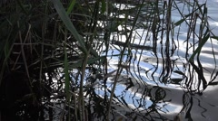 Tranquil natural reflections in water on lake Nature Background Stock Footage