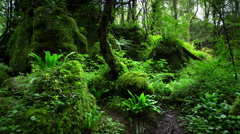 4k puzzlewood forest of dean Stock Footage