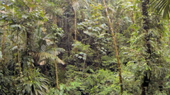 Flying through tropical rainforest in Ecuador. Stock Footage