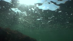 Stock Video Footage of Passage of fish swimming below the surface of Black sea