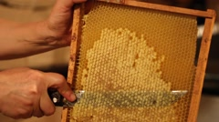 Beekeeper unsealing honeycomb Stock Footage