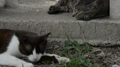 Cats napping in the park Stock Footage
