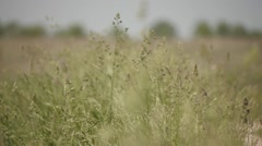 Grass field Stock Footage