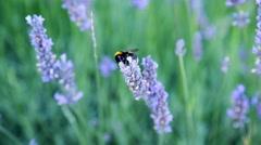Bee flying Stock Footage