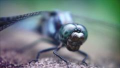 DragonFly in Laos Stock Footage